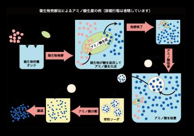 微生物発酵法によるアミノ酸製造