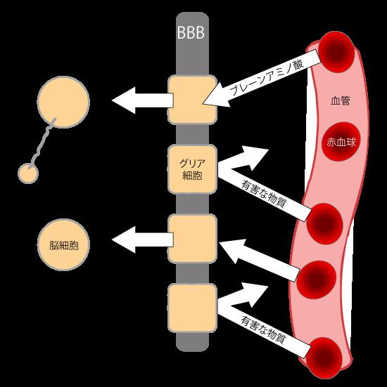 血管脳関所-BBB